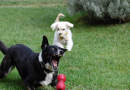 Top Five Toys that will Keep Your Dog Entertained While Alone