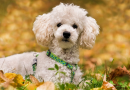 Top 5 Most Popular Dog Breeds People Buy