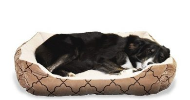 Give Your Furry Pal The Best Sleep and Rest time with Pawpedics Dog Beds